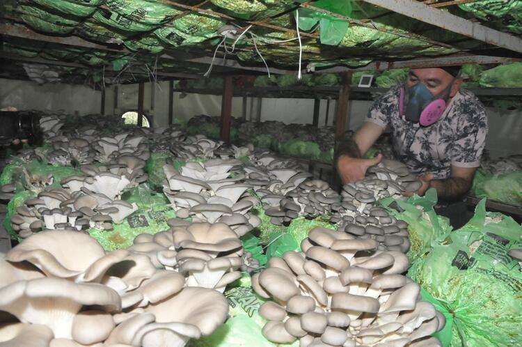 Emekli astsubayın hobisi, mesleği oldu! Yılda 40 ton üretiyor - Resim: 2