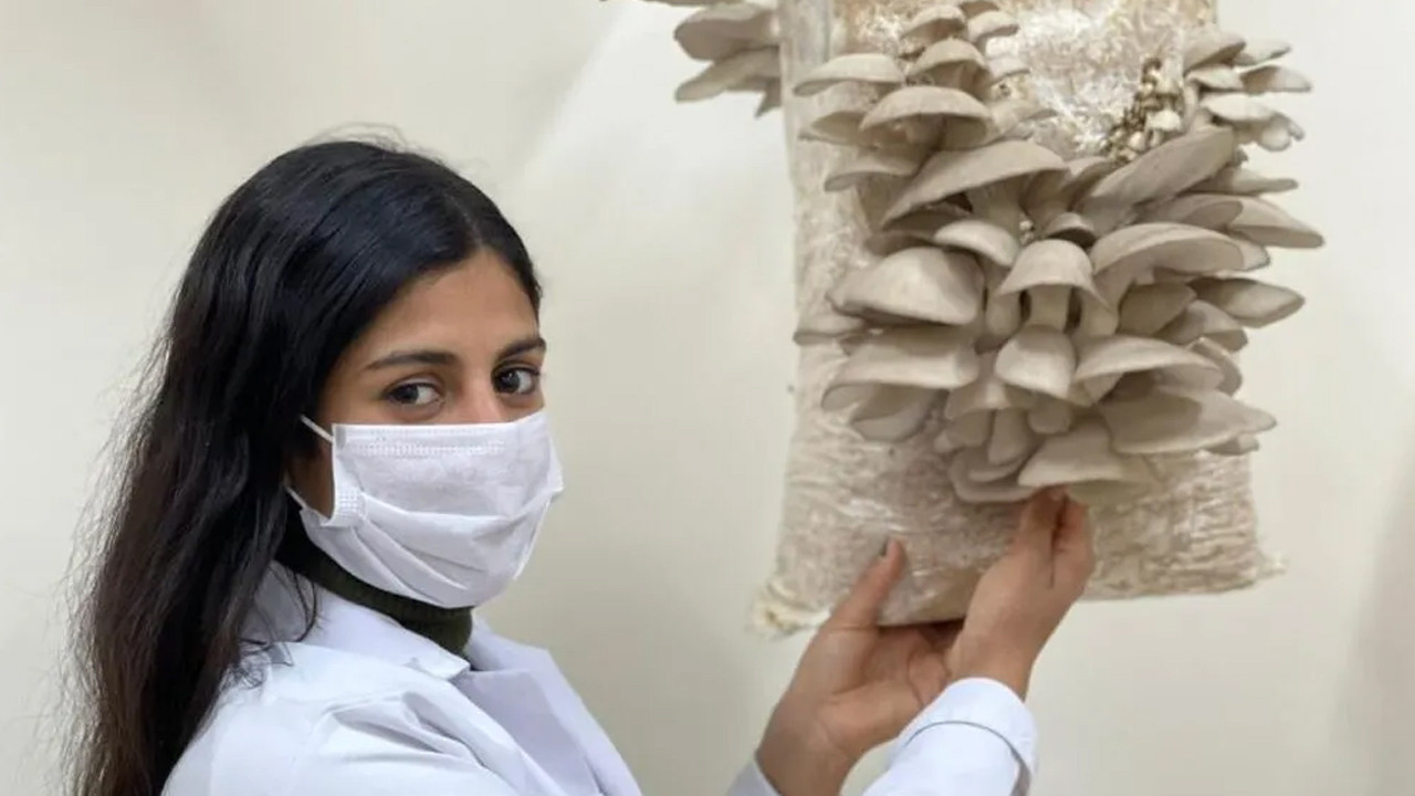 İstiridye mantarı üretiminden günlük 5 bin TL kazanıyor