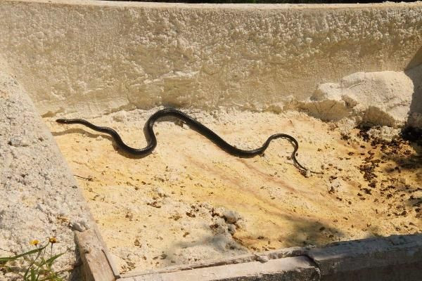 Kuşadası'nda yılan istilası!