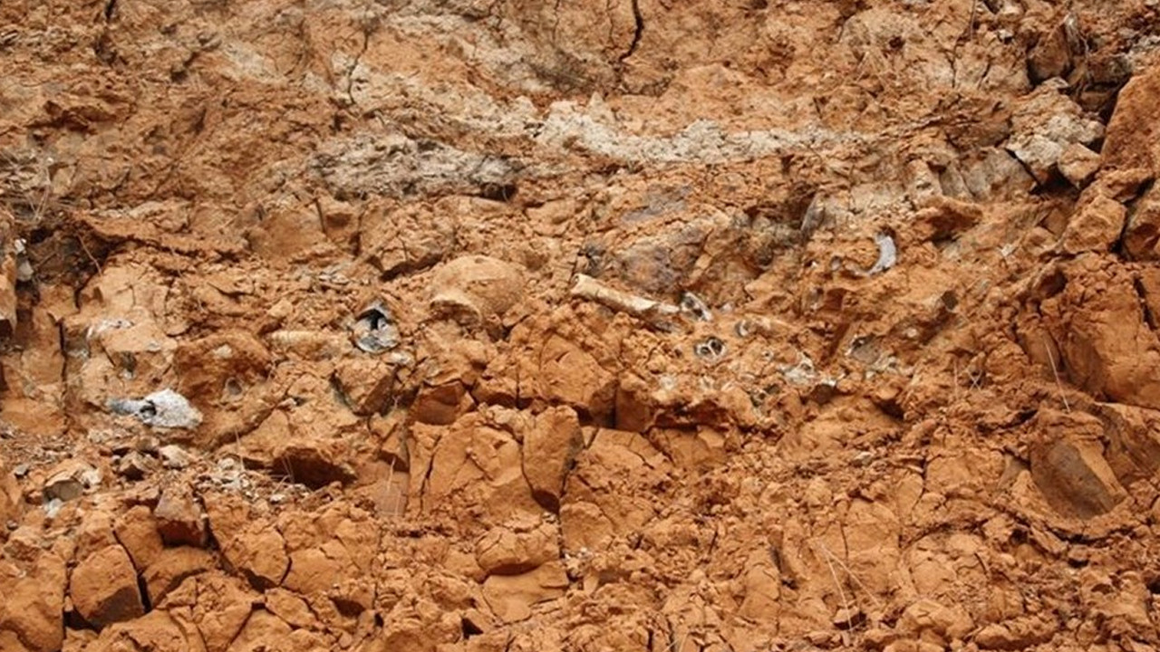 1 milyar yıllık fosil keşfedildi