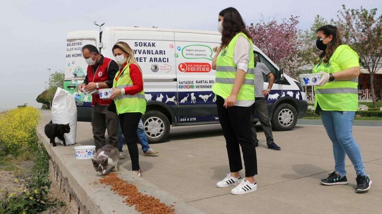 Kartal Belediyesi tam kapanma sürecinde de sokak hayvanlarının yanında