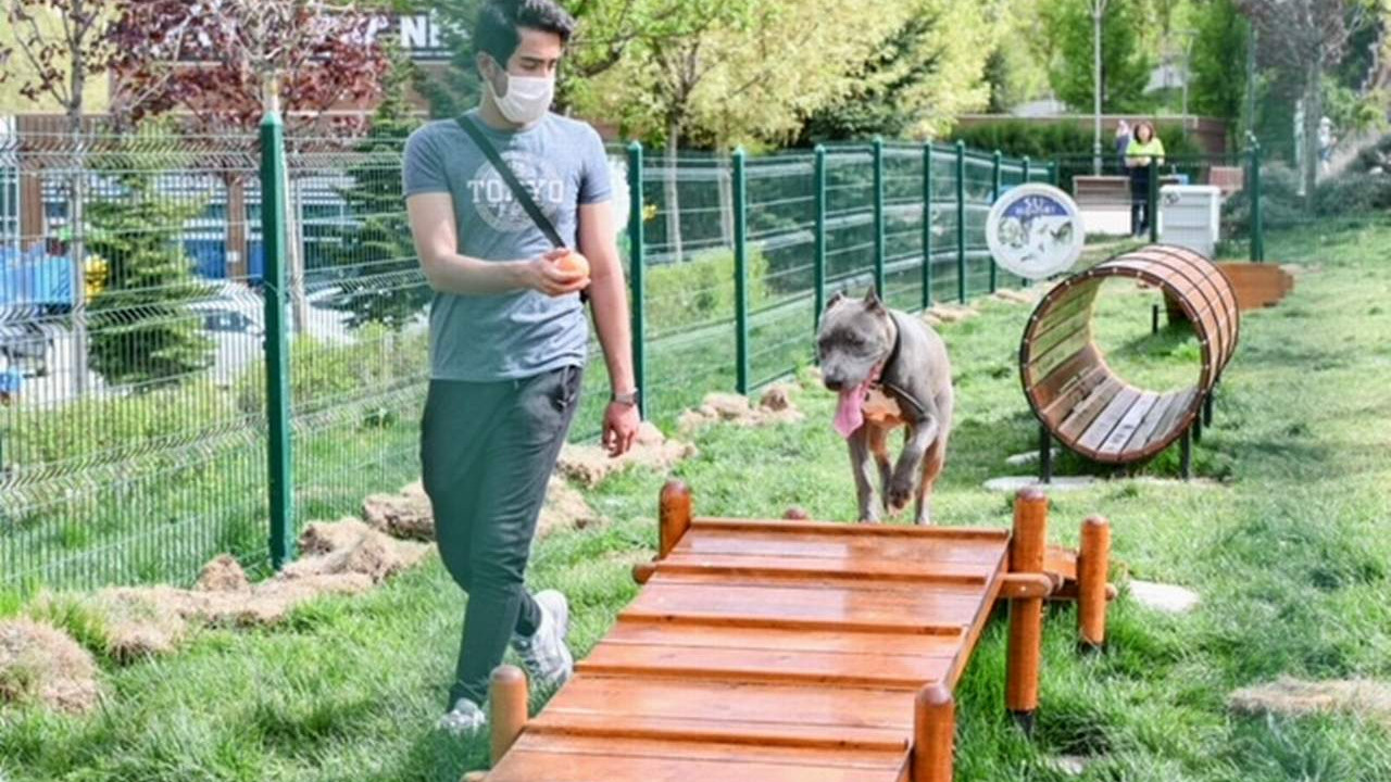Ankara Büyükşehir'den hayvanseverleri sevindiren proje
