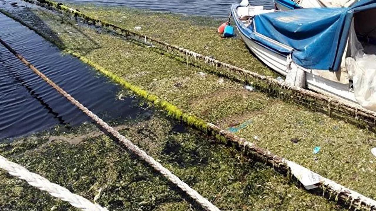 Burası İzmir Körfezi... Deniz salyasından sonra bir de bu çıktı