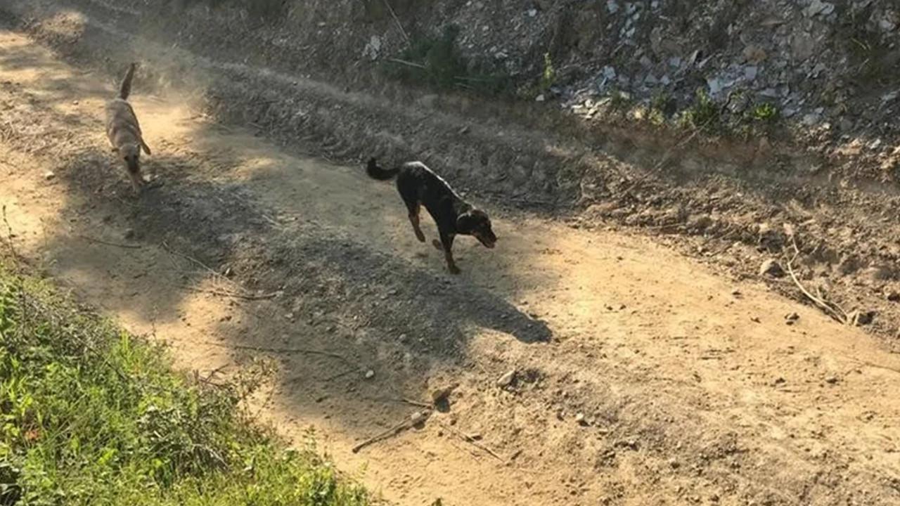 Aydın'da bakıma muhtaç köpekleri ölüme terk eden belediyeye ceza