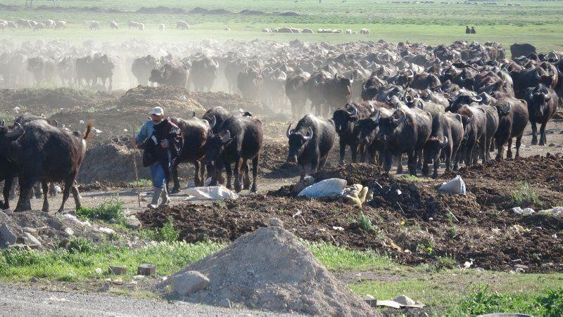Burası Afrika değil Türkiye... İnanılmaz görüntü - Resim: 1