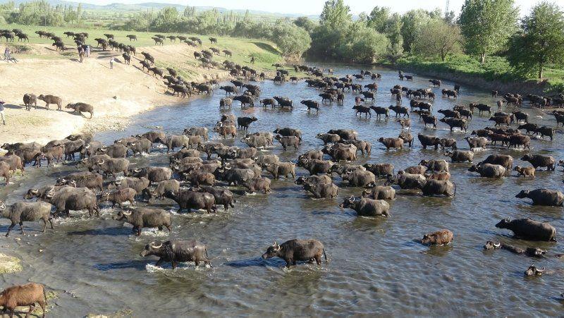 Burası Afrika değil Türkiye... İnanılmaz görüntü - Resim: 3