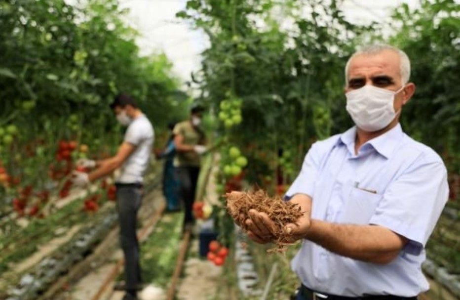 Hindistan cevizi kabuğundan domates üreten çiftçi paraya para demiyor - Resim: 3