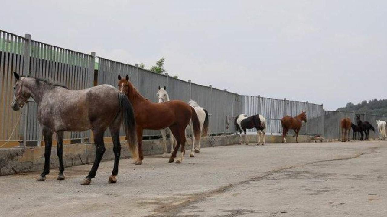 İBB'den kayıp at iddialarına cevap geldi