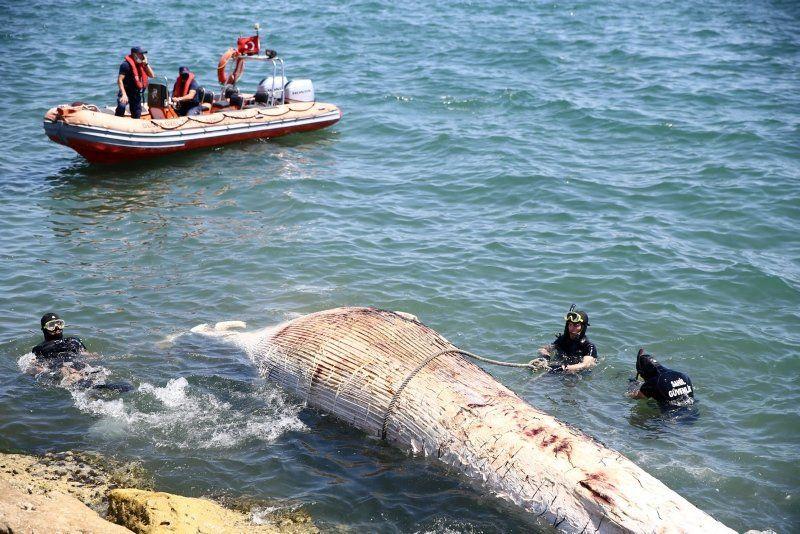 Dev balina Mersin'de sahile vurdu - Resim: 3