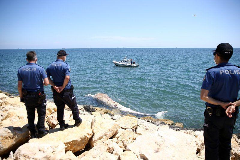 Dev balina Mersin'de sahile vurdu - Resim: 4