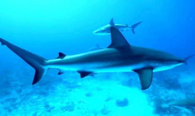 Okyanusta insan kanıyla köpek balığı deneyi