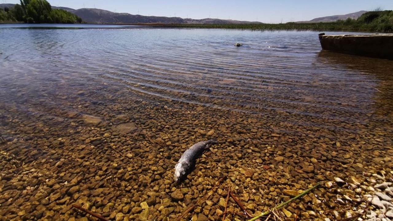 Büyük Menderes Nehri'nde balık ölümleri başladı
