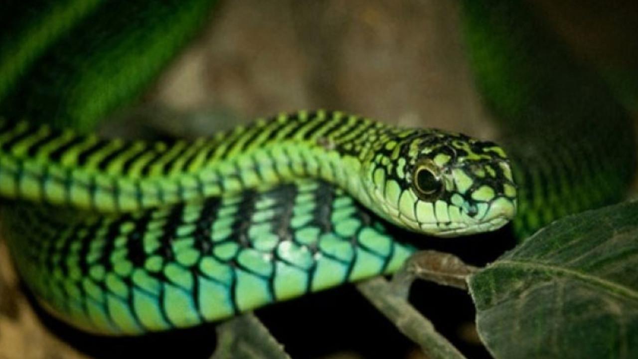 Ölümcül ve korkunç... İşte dünyanın en tehlikeli hayvanları