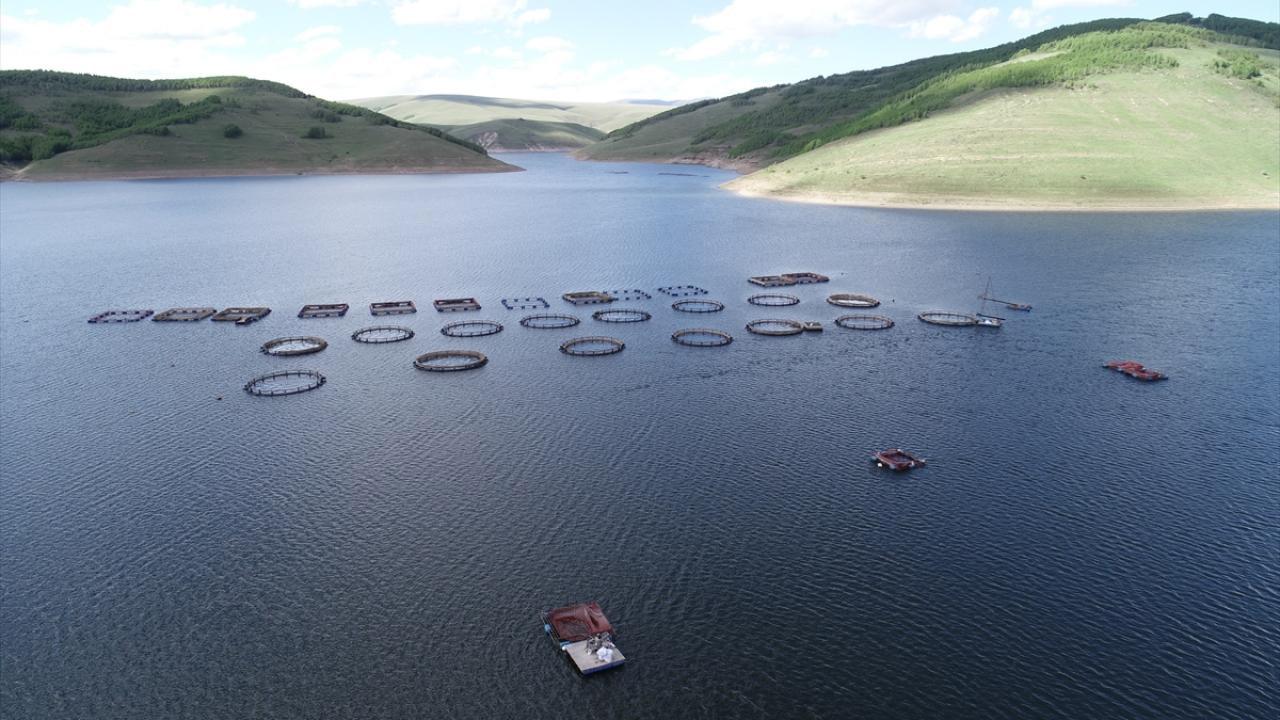 Erzurum'da üretilen alabalıklar Karadeniz'de satılıyor