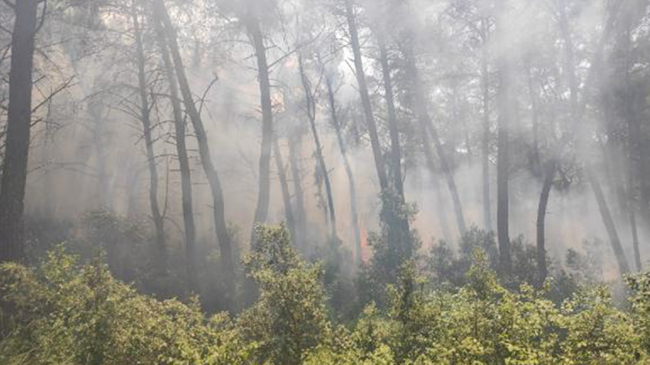 Karatepe Milli Parkı'nda orman yangını