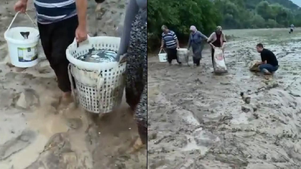 Adana'da ilginç anlar... Tarladan kova kova balık topladılar