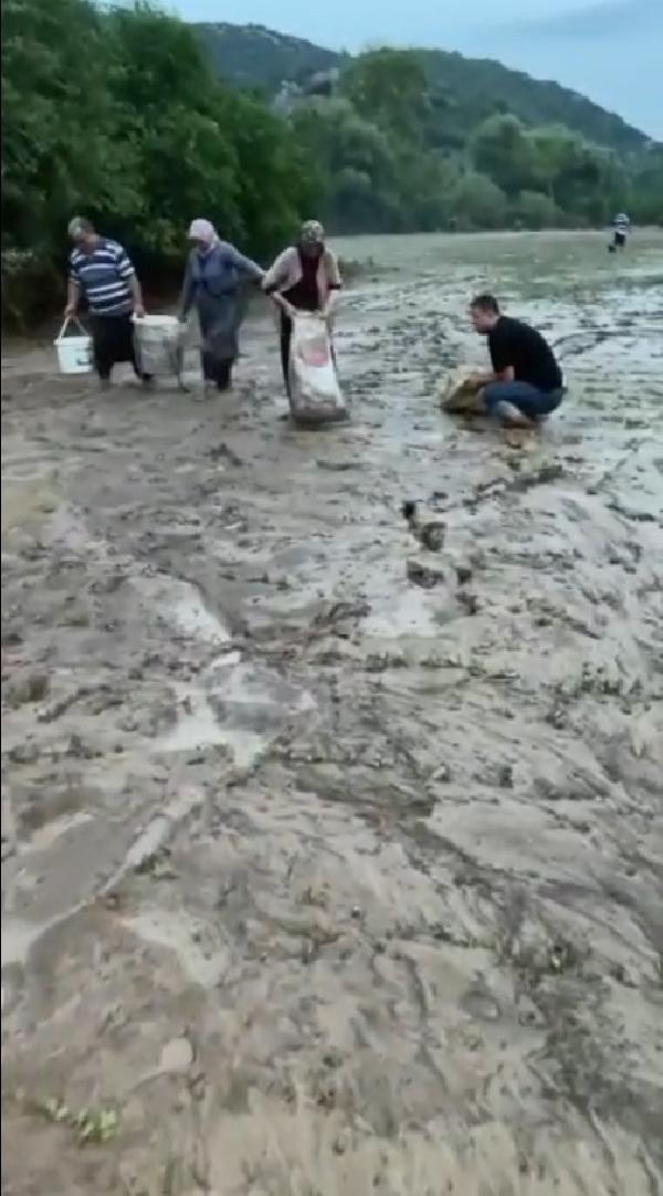 Adana'da ilginç anlar... Tarladan kova kova balık topladılar - Resim: 2