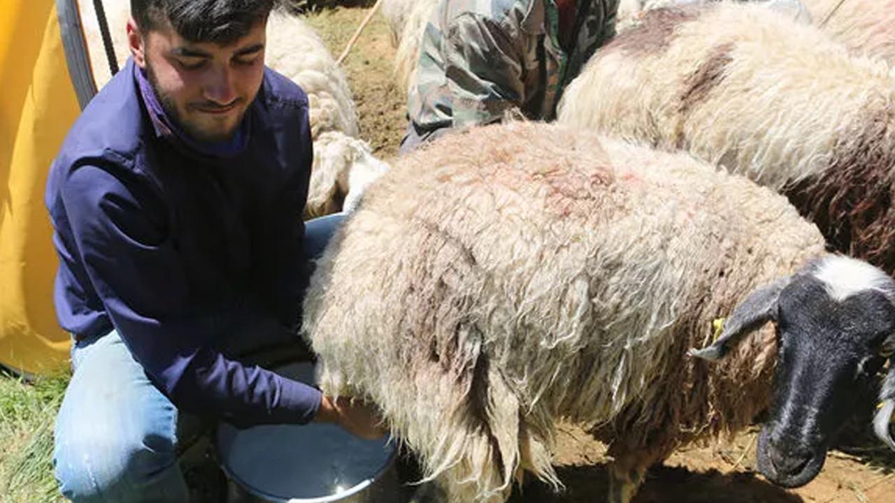 Büyükelçilik çobanlık yaparken Robert'e giren Mahir için harekete geçti