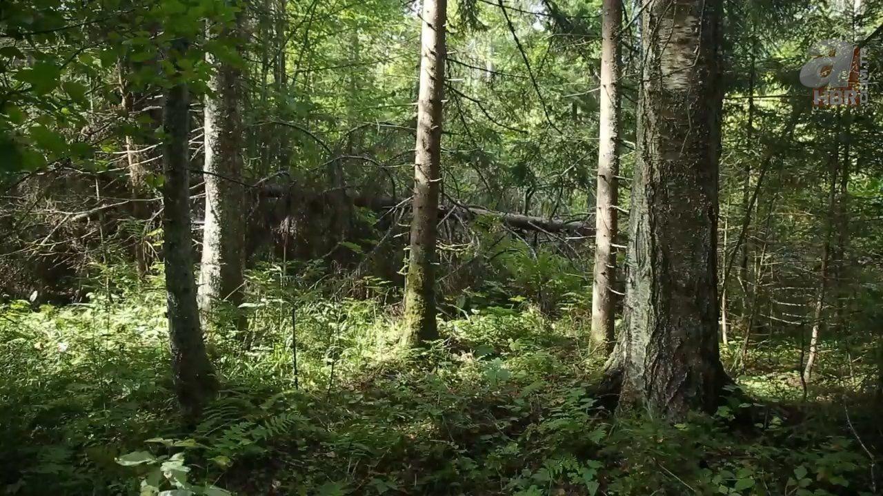 Kadın maceracı ormanda streçten öyle bir şey yaptı ki - Resim: 1
