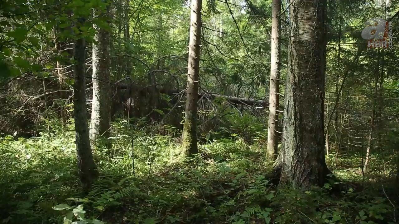 Kadın maceracı ormanda streçten öyle bir şey yaptı ki