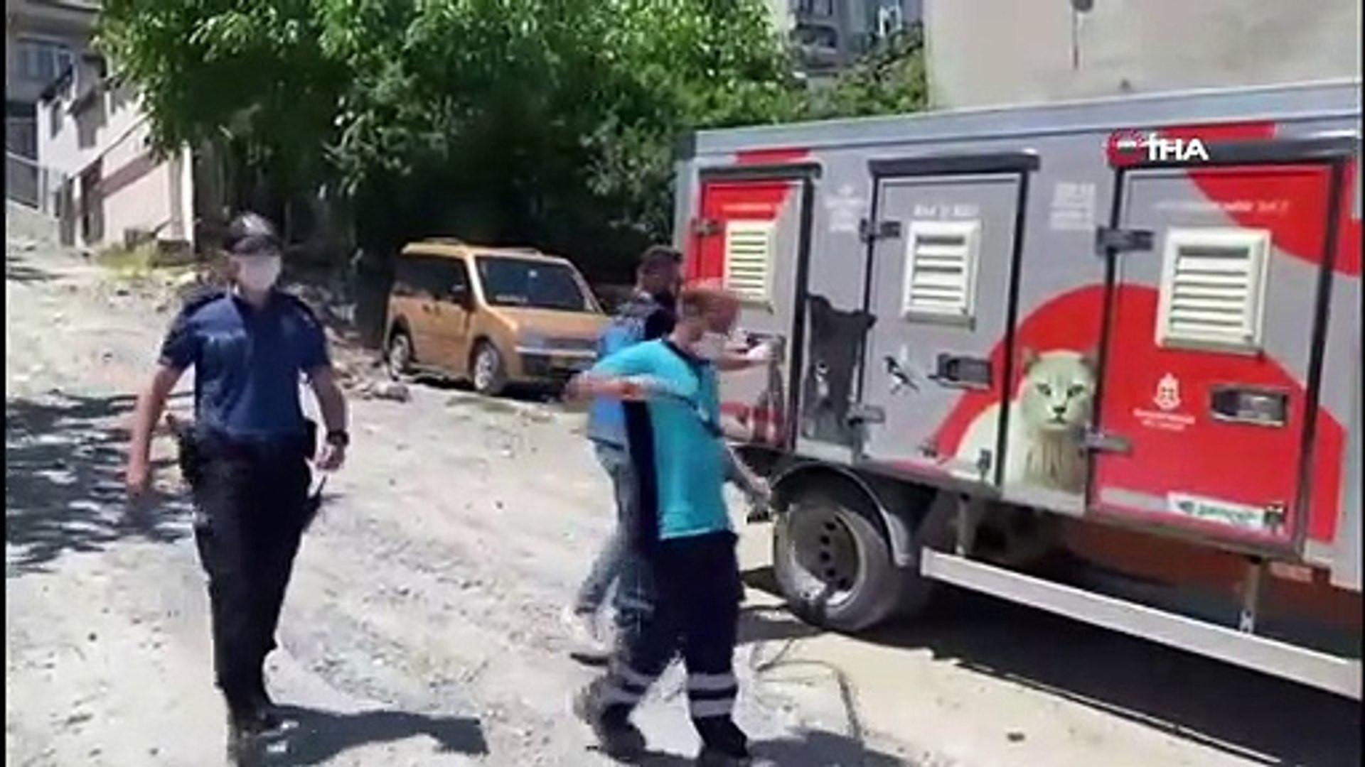 Yine pitbull dehşeti! Genç kızı köpeğin ağzından mahalleli kurtardı