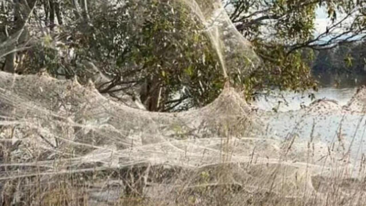 Felaketlerin ardı arkası kesilmiyor: Farelerden sonra örümcekler istila etti