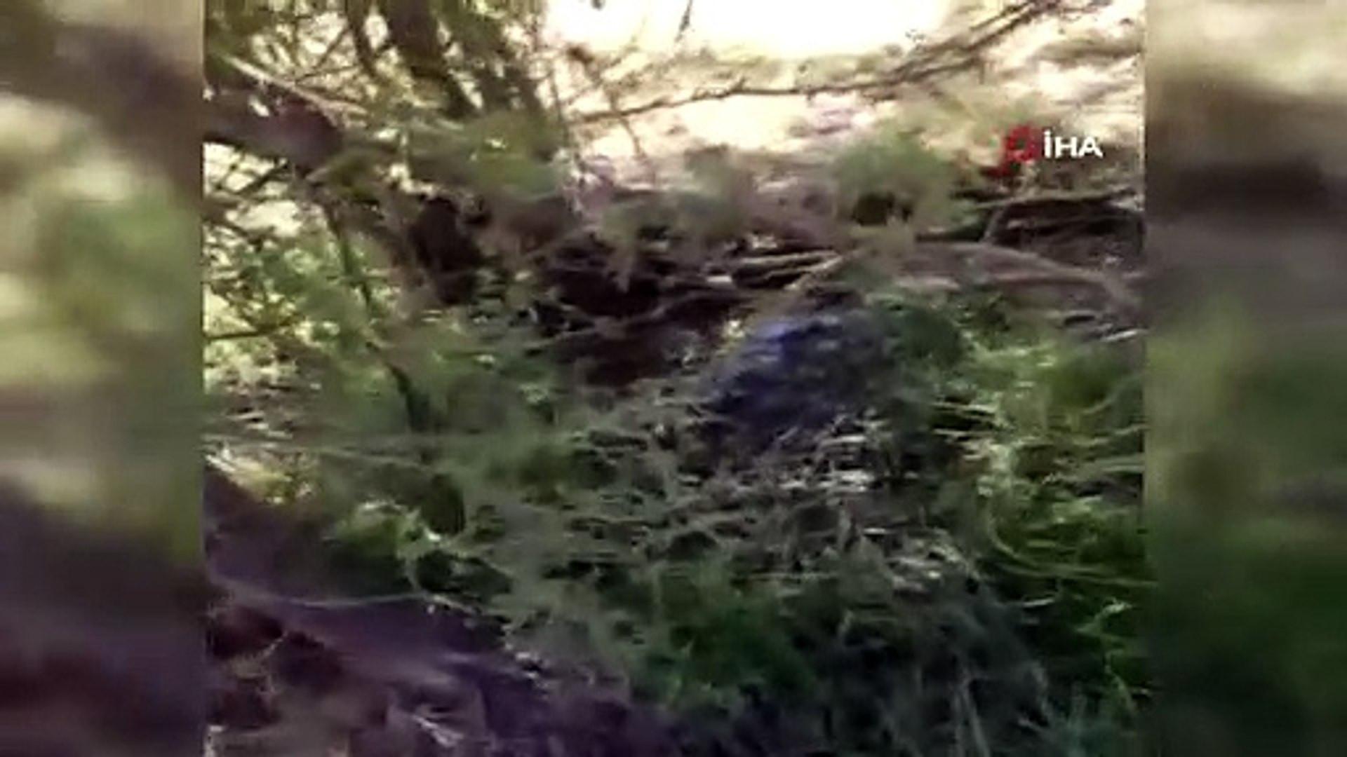 2 metrelik yılan, gri benekli yılanı böyle yedi