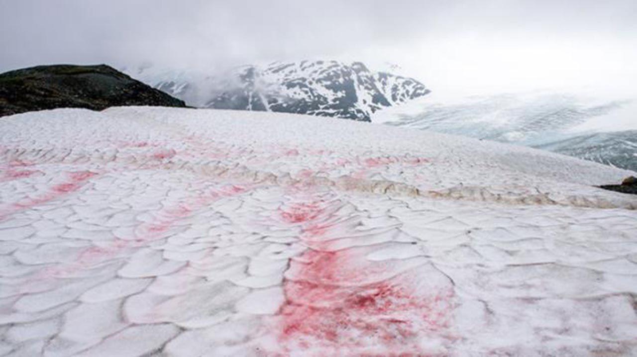 Bu sefer de kırmızı kar yağdı! Bilim insanları harekete geçti... - Resim: 3