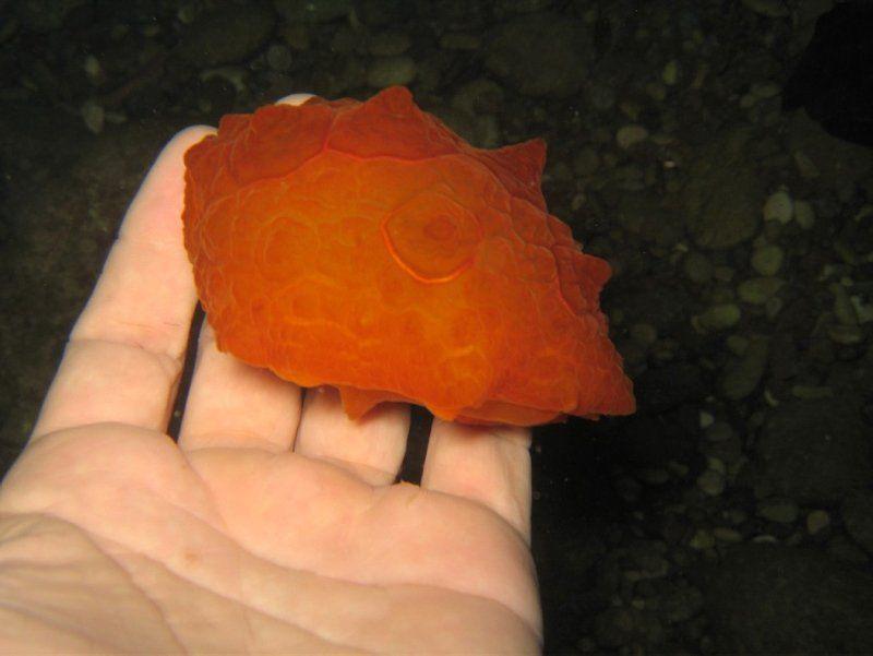 Antalya'da denizde buldu, poşet sandı ama gerçek bambaşka çıktı - Resim: 4