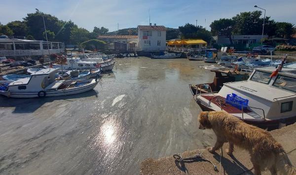 Müsilajda korkulan oldu! Ege'nin cennet adası Bozcaada'da da görüldü - Resim: 1