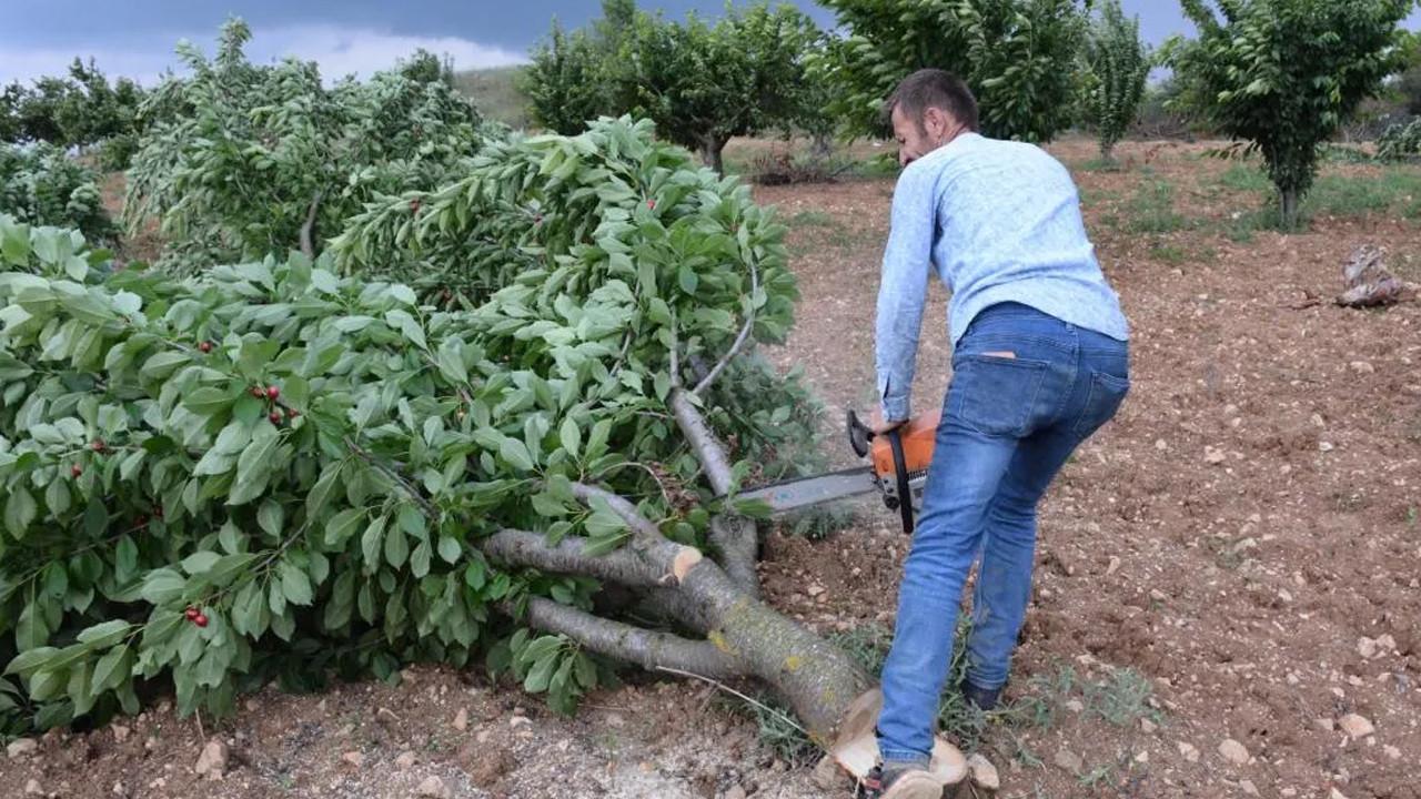 ''Bahçede 2 lira olan kiraz tezgahta 15 lira'' diyerek ağaçlarını...