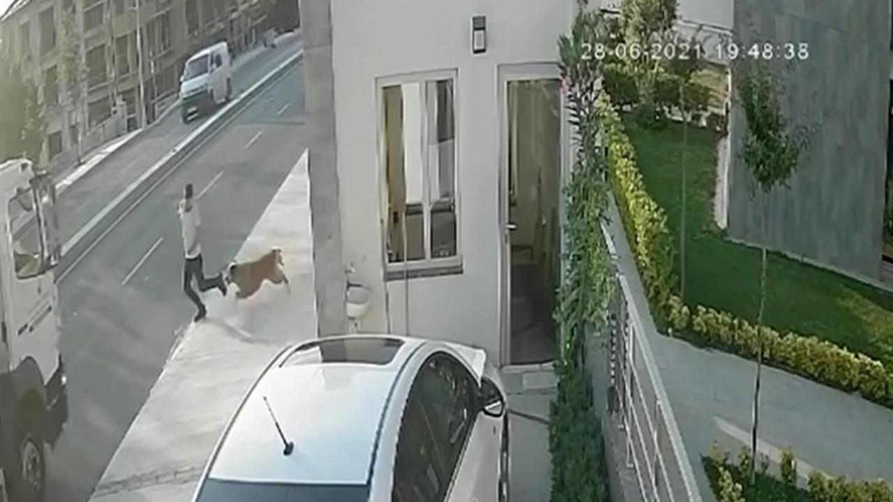 İstanbul'da feci olay! Köpekten kaçarken kamyon çarptı