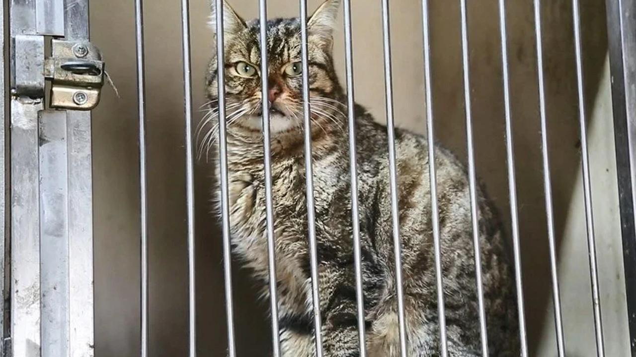 Şaka değil gerçek: Kedilerin sokağa çıkması yasaklandı
