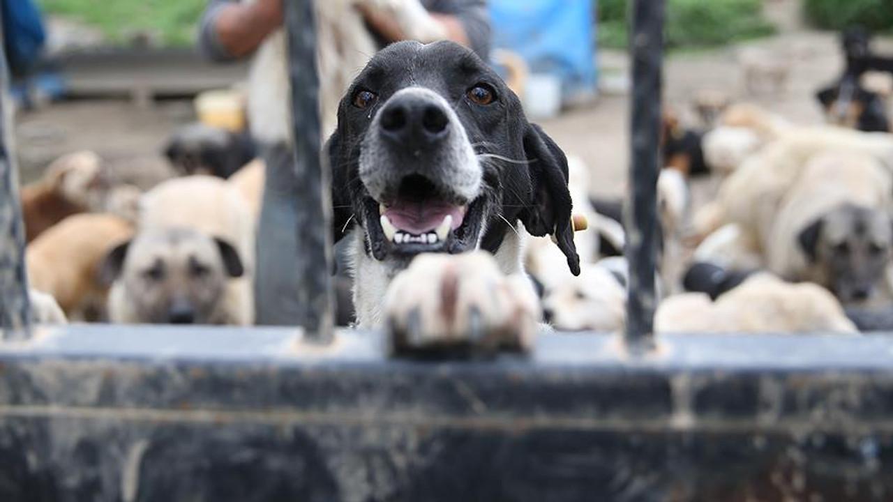 Oh be! Hayvanları ''mal'' değil ''can'' ilan eden yasa Meclis'te