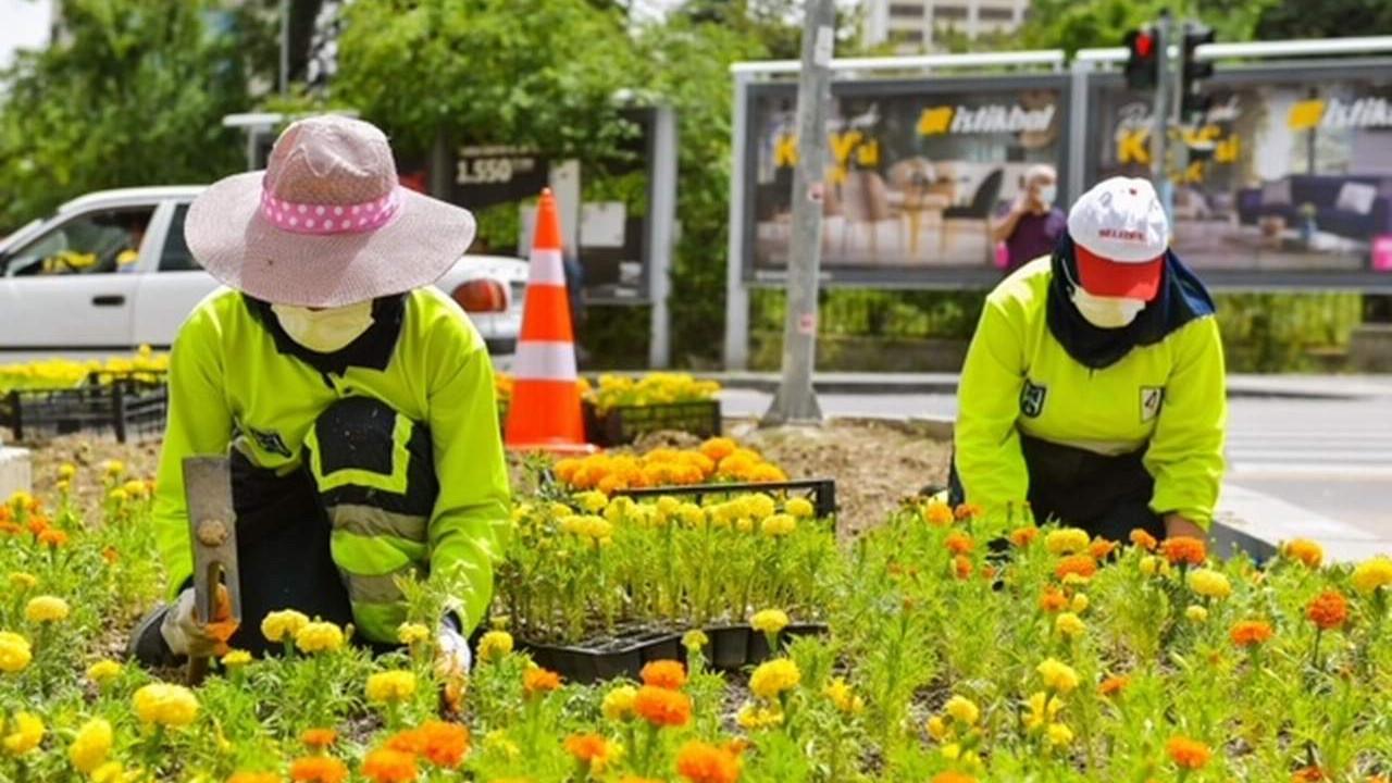 Başkent Büyükşehir'in yaz çiçekleriyle şimdi daha güzel