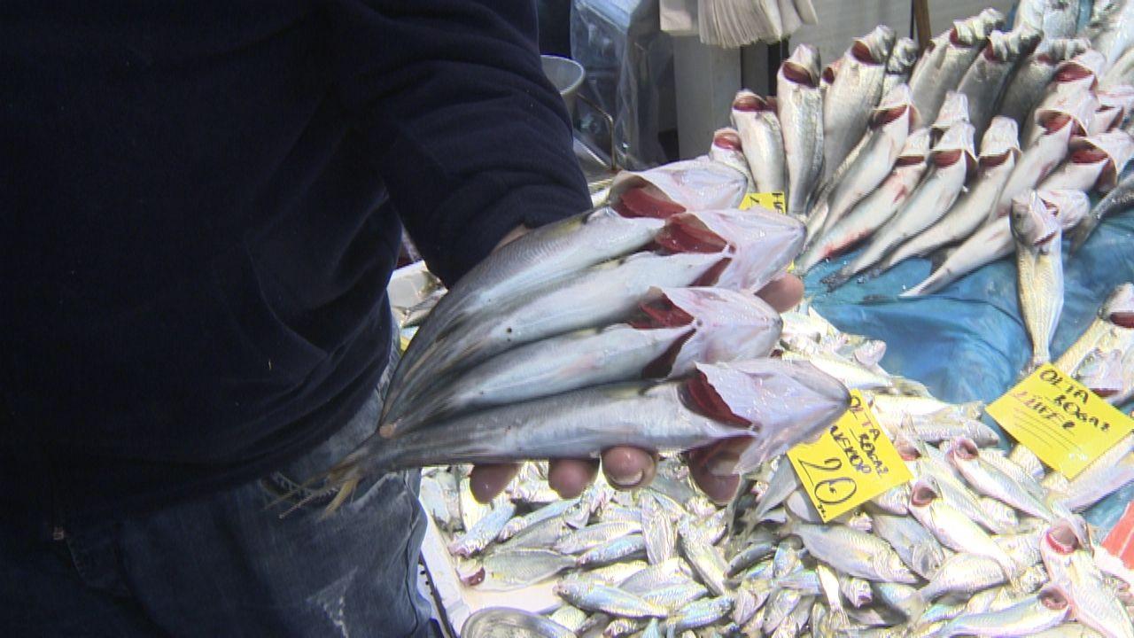 Kötü haberi Bakan verdi: Marmara'ya balık avı yasağı masada