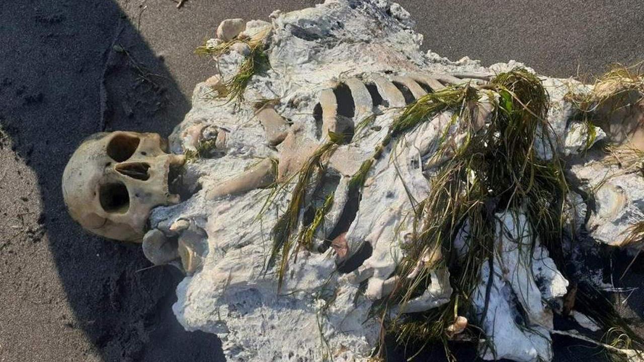 Sahilde yürüyüş yaparken gördüler! Kıyıya iskelet vurdu