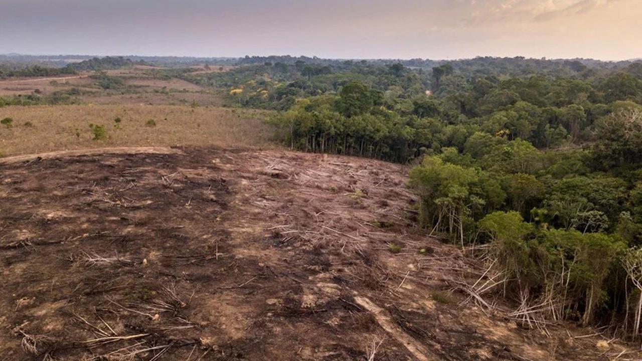 Amazon emdiğinden daha fazla karbondioksit salıyor