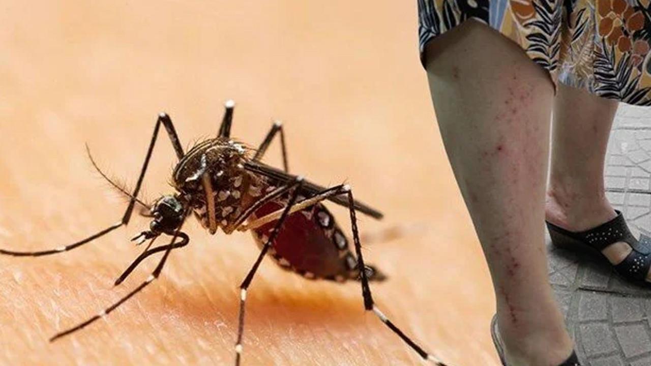 Karadeniz için uyarı: sya Kaplan Sivrisineği