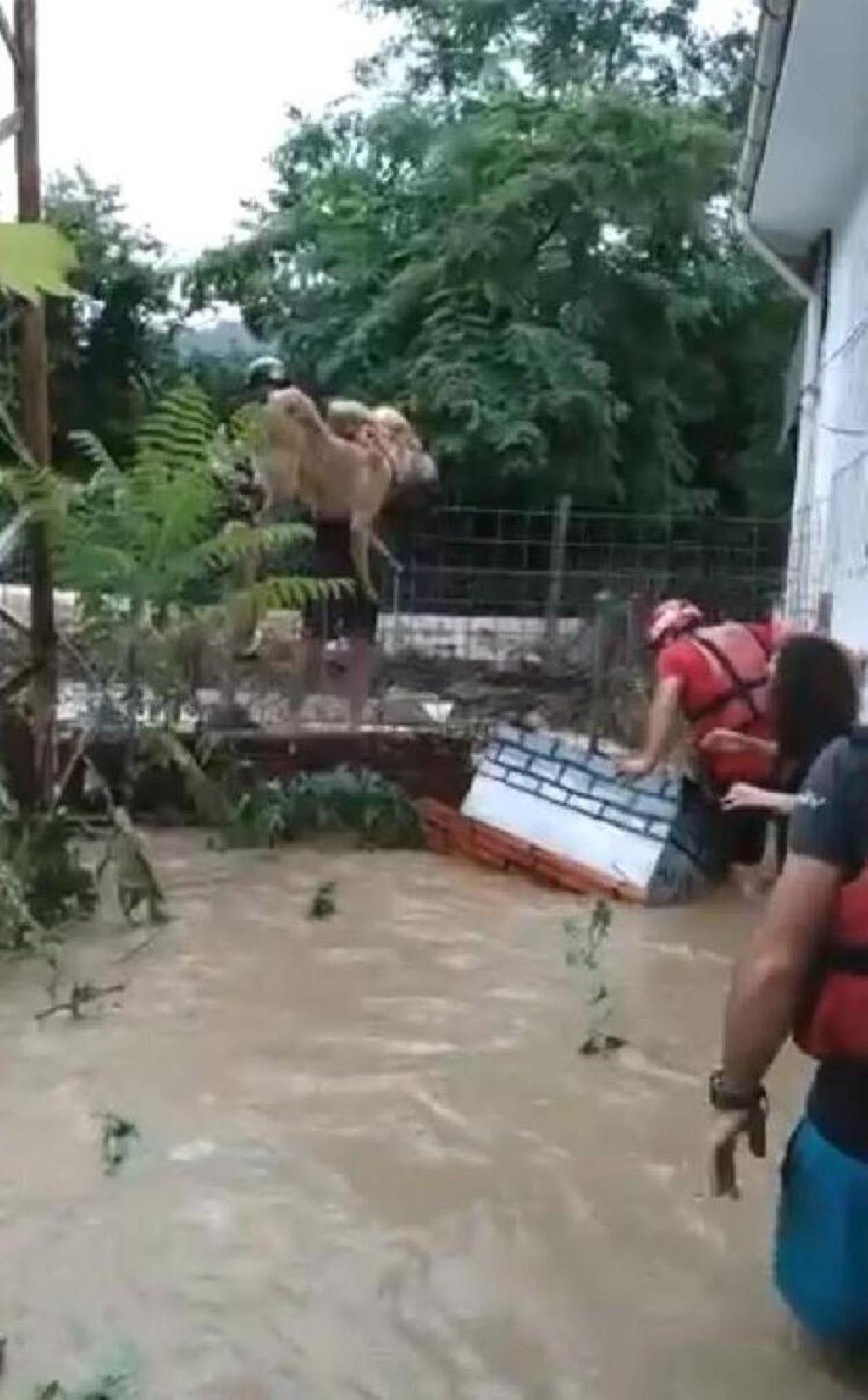 Artvin'deki sel felaketinden yeni görüntü! Gözyaşlarına boğuldu - Resim: 3