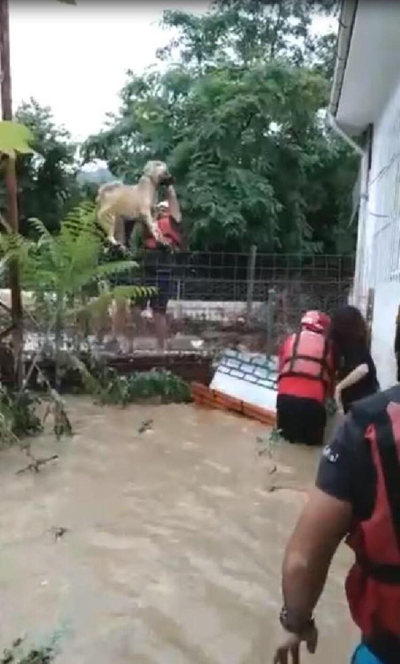 Artvin'deki sel felaketinden yeni görüntü! Gözyaşlarına boğuldu - Resim: 4