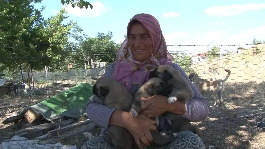 Anadolu ırkı çoban köpekleri fiyatlarıyla dikkat çekiyor - Resim: 4