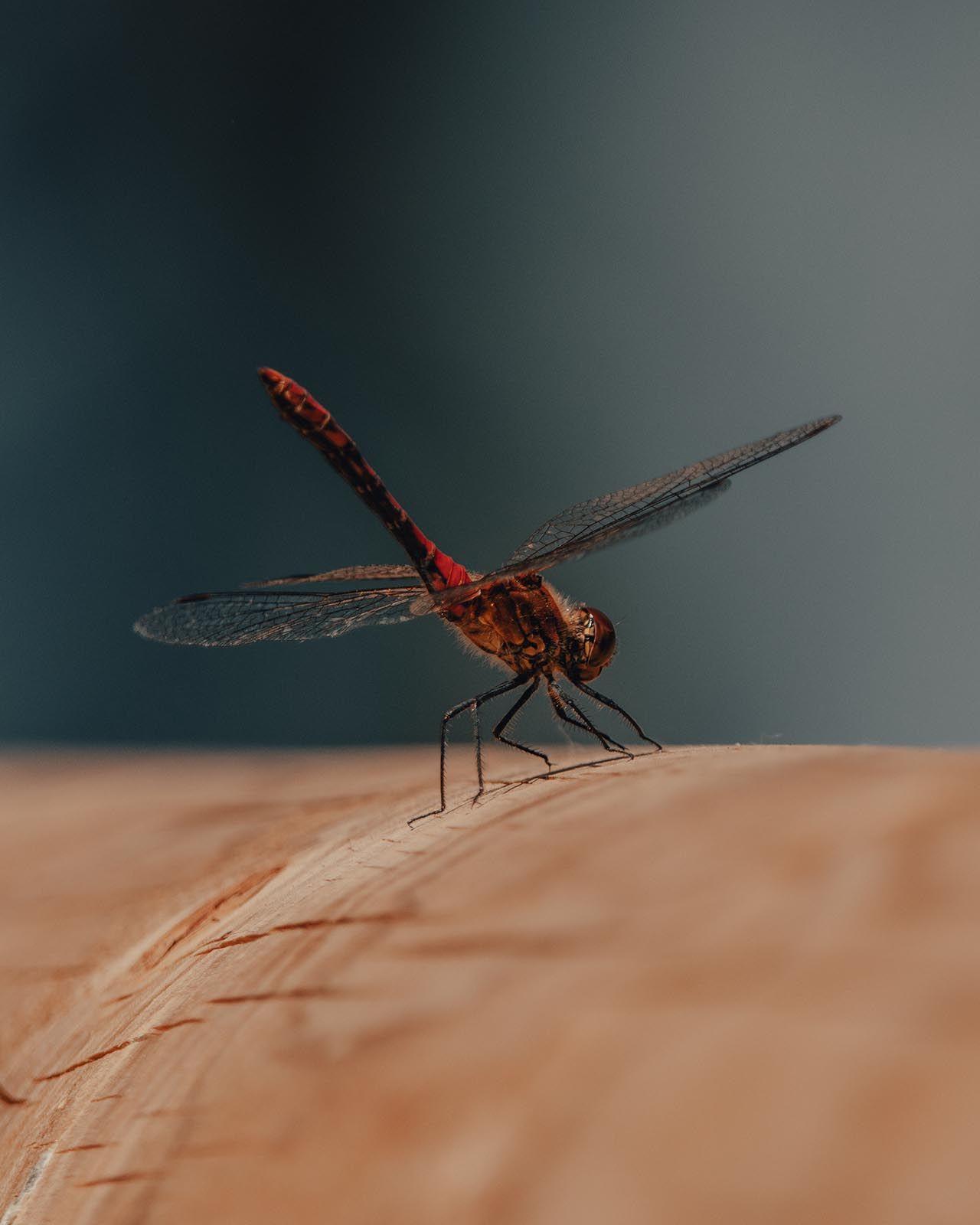 Sivrisinek deyip geçmeyin! Uzman isim uyardı: Ölümcül olabilir! - Resim: 1