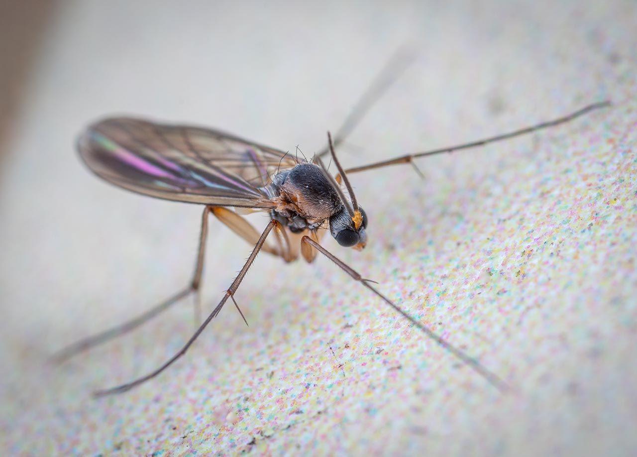 Sivrisinek deyip geçmeyin! Uzman isim uyardı: Ölümcül olabilir! - Resim: 4
