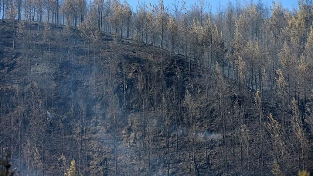 Güzel haberler geldi: 4 ilde orman yangınları kontrol altına alındı - Resim: 4