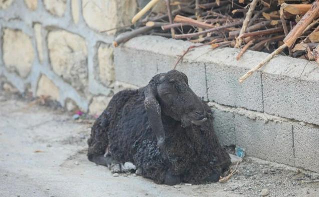 Manavgat'taki yangın evleri kül etti - Resim: 1