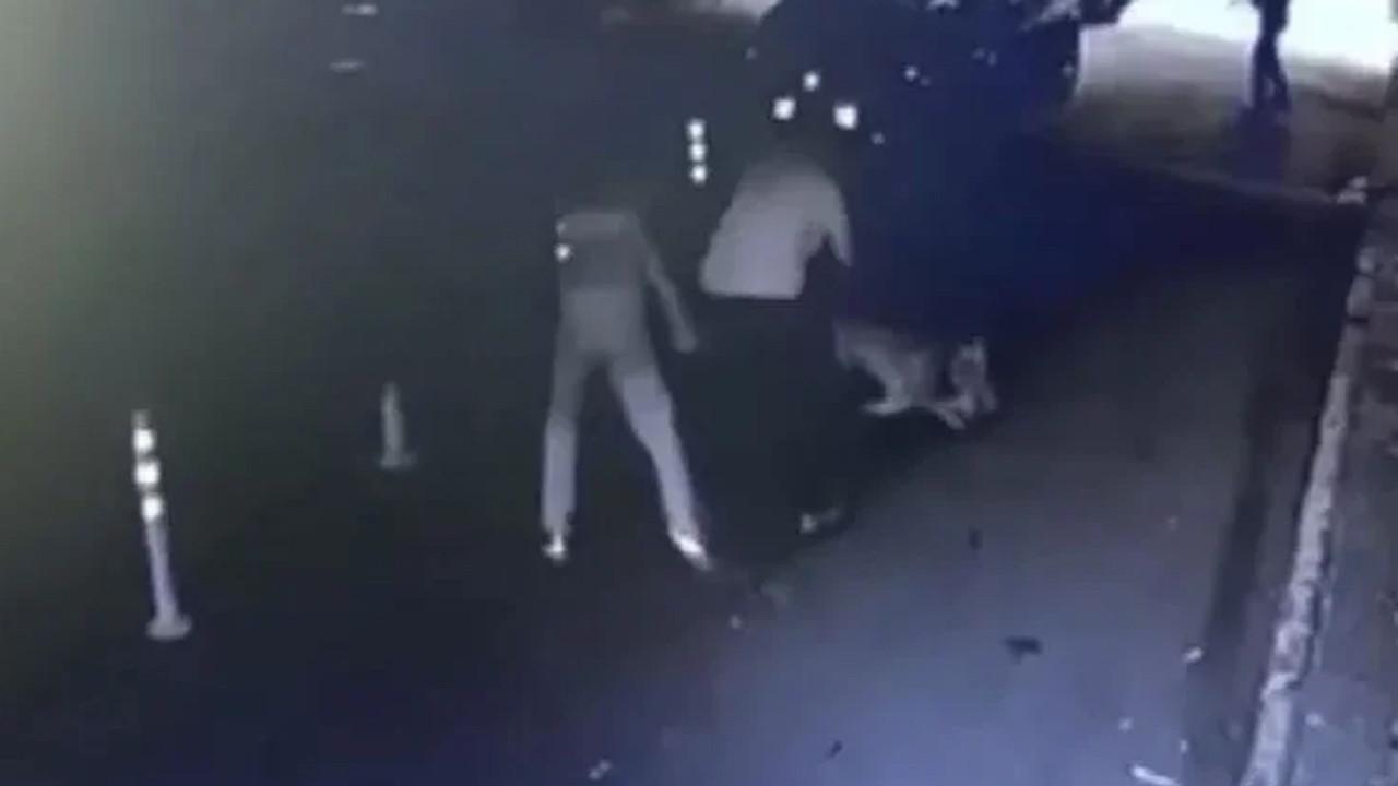 Böyle canilik görülmedi: Sokak kedisini pitbulla öldürttü