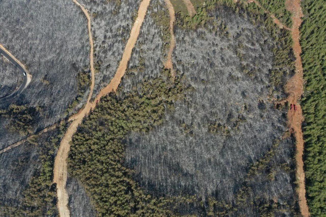 Otellerin yanı başındaki ormanlık alan küle döndü - Resim: 1