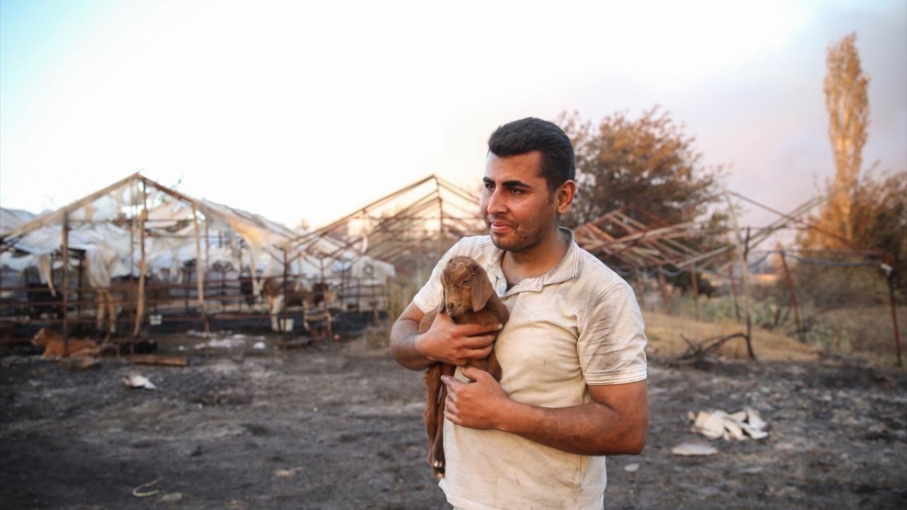 Manavgat yangınında mucize: Alevlerin arasında dünyaya geldi