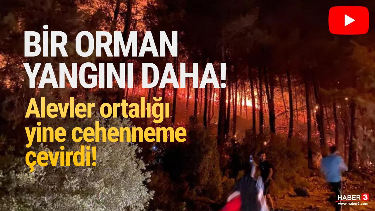 Bir orman yangını da Fethiye'de çıktı!